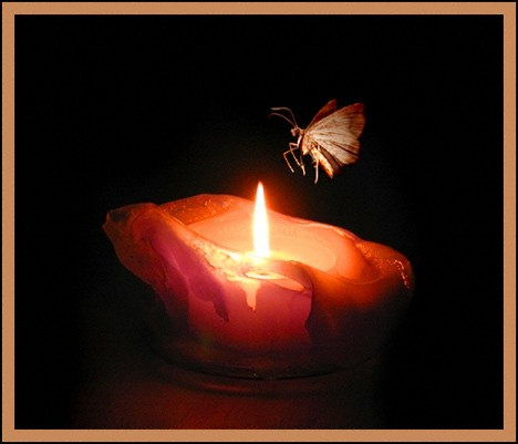 Moth to a Flame by Rachita 